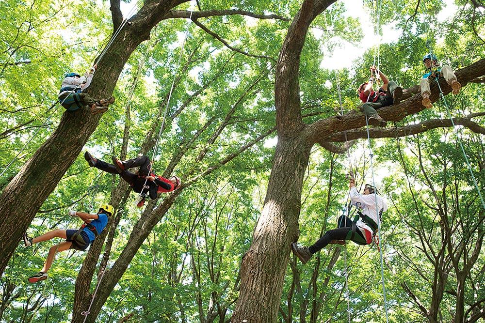 小平中央公園のツリークライミング体験会