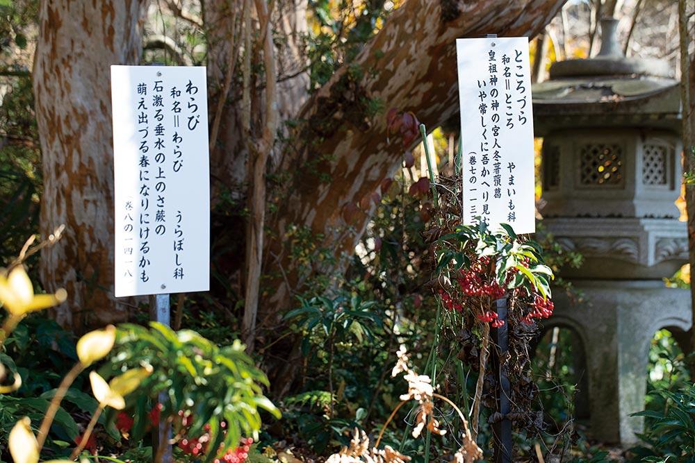 武蔵国分寺 万葉植物園