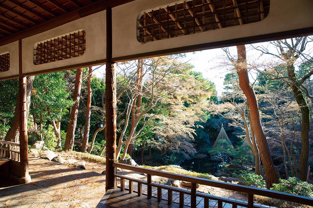 殿ヶ谷戸(とのがやと)庭園 / 武蔵国分寺 万葉植物園