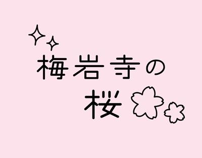 梅岩寺の桜