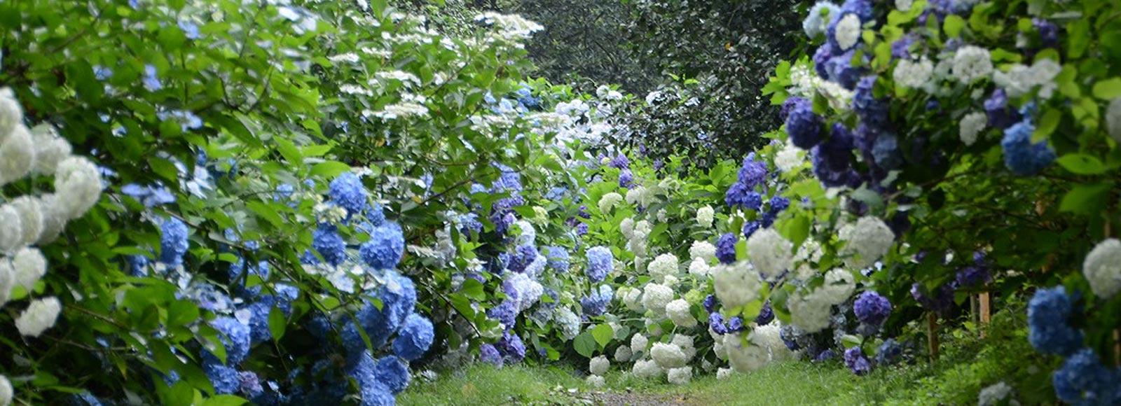 花に癒やされながら あきる野ハイキング