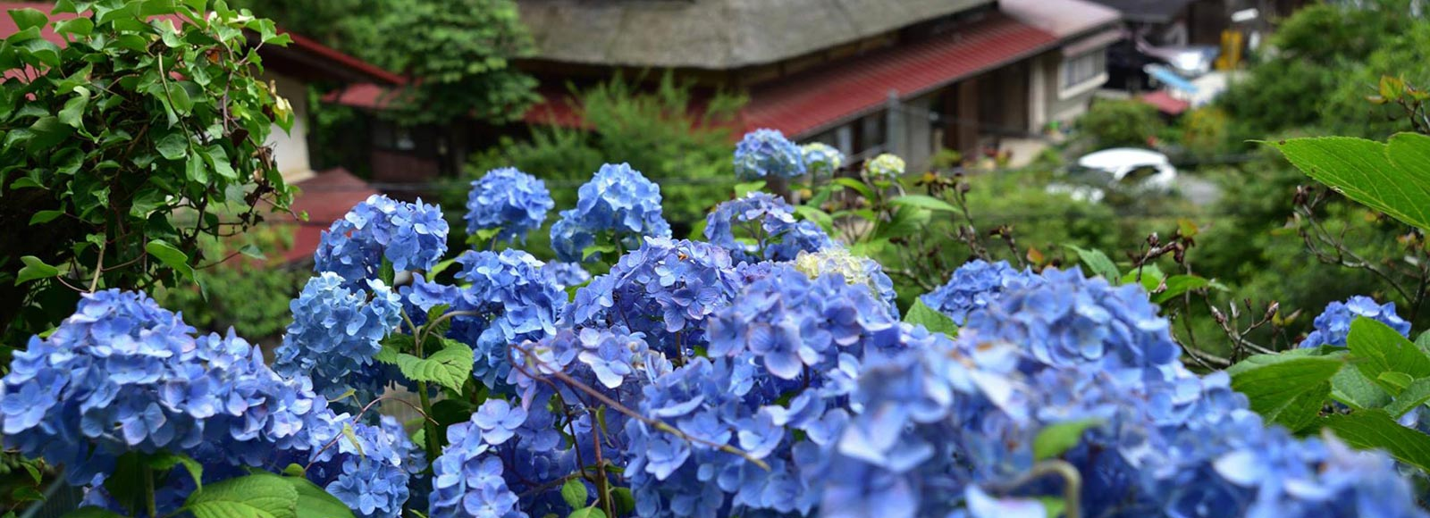秋川渓谷 春の花めぐり