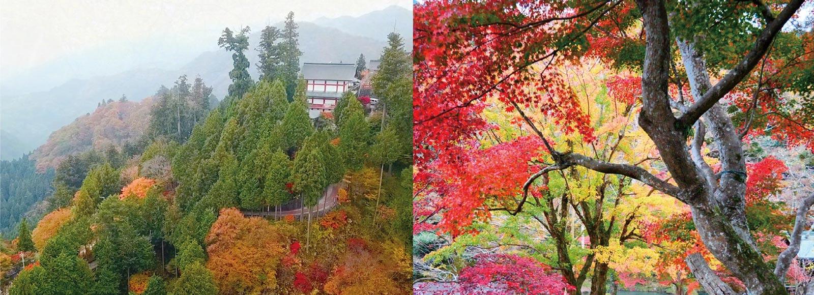 秋の紅葉(もみじ)リレー