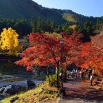 秋の紅葉狩り